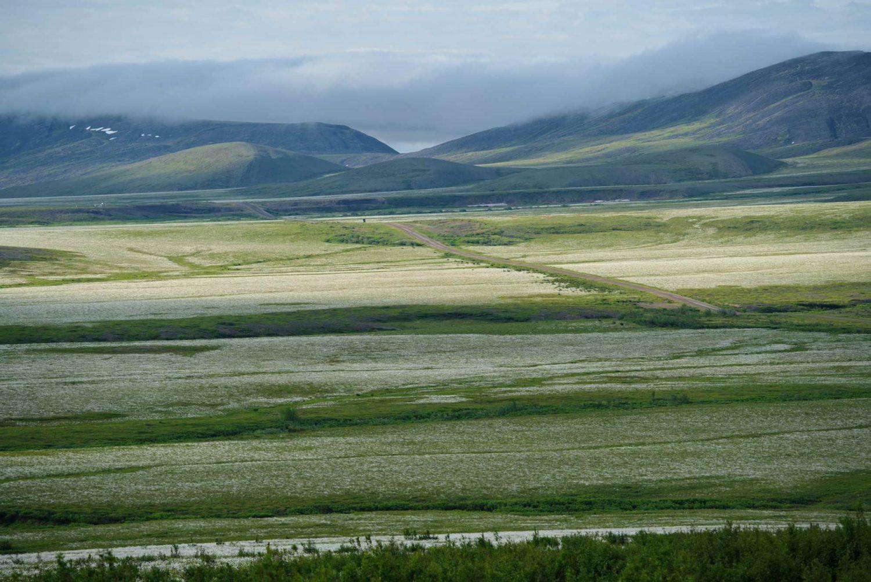 Dempster-Highway-cottongrass-field-richardson-mountains