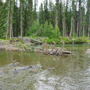 Big-salmon-river-yukon-sweeper